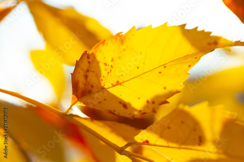 Autumn background with leaves - 231452053