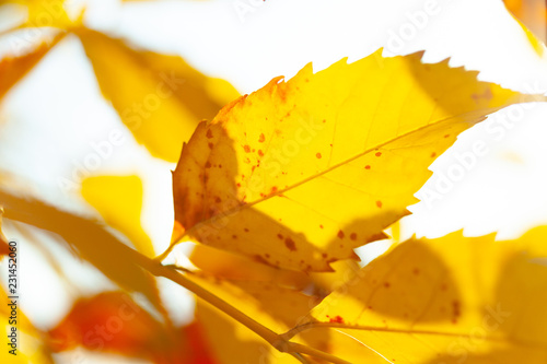 Autumn background with leaves - 231452060