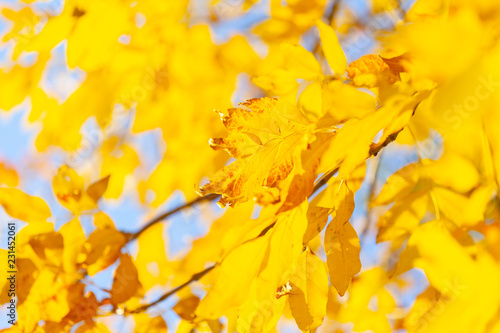 Autumn background with leaves - 231452061