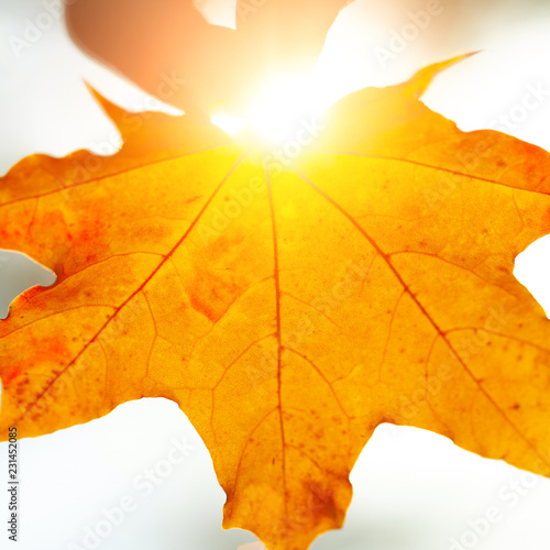 Autumn background with leaves - 231452085