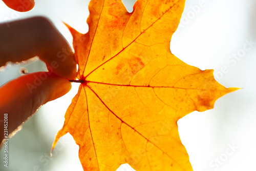 Autumn background with leaves - 231452088