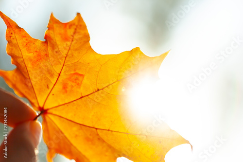 Autumn background with leaves - 231452094