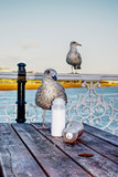Seagull awaiting food order