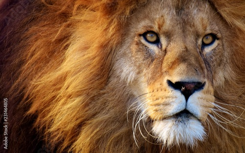 What animals are kept in the zoo and not only. Wildlife zoos wild forest. - 231464805