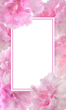 Festive floral frame template with pink gentle azalea flowers and blank rectangular white space for text. Elegant flower design in romantic style