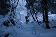 the skier with mountaineering skis in the snow-covered forest