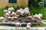 Vögel aufgeregte Flamingos Gruppe rosa streitend