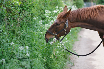 Brown horse eats lush green grass on the side of the road