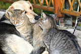 Dog and cat to snuggle in animal love best friends - 231506686
