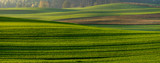 panorama of a green field in autumn scenery - 231512625