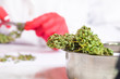 laboratory hands in gloves with scissors cut cannabis for analysis