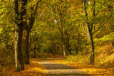 Autumn landscape road with colorful trees . Bright and vivid autumn foliage with country road - 231514434