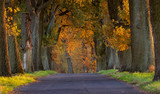 Autumn landscape road with colorful trees . Great oak alley.Autumn foliage with country road - 231515635