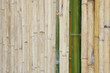 Perspective View of Bamboo Wall as Texture Background