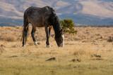 Grey wild mustang  in the desert - 231529296
