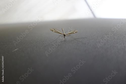 Mosquito al acecho - 231529497