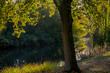 Leinwanddruck Bild - HerbstLicht