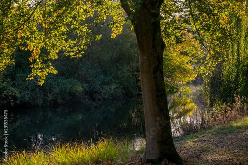 Leinwanddruck Bild HerbstLicht