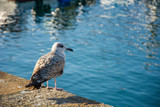 Photo of a bird with selective focus and sunlight - 231537426