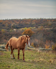 wild horse on meadow closely