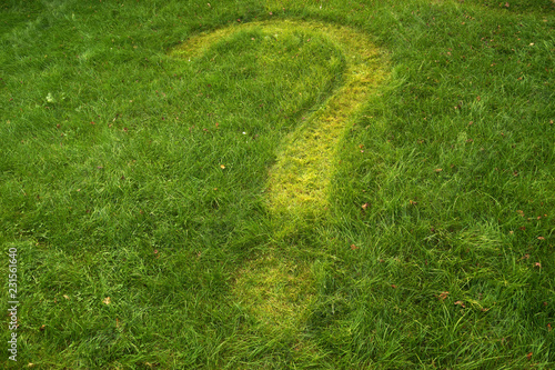 Green lawn. Question mark mowed in the lawn. - 231561640