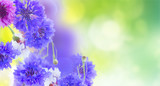 Posy of blue and pink cornflowers on green garden background banner