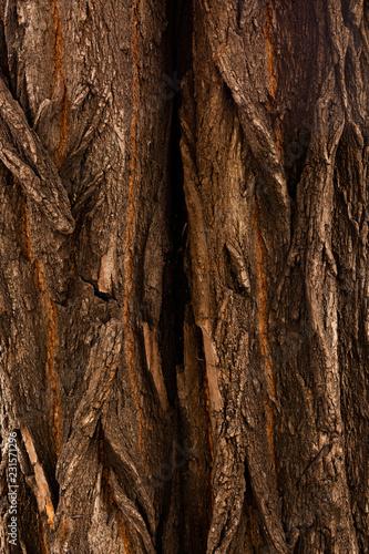 tree bark - 231571296