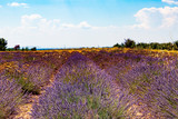 Lavender field. Harvesting. Beautiful sky. Against the backdrop of mountains and clouds. French Provence. Сard.Surroundings of Valansol.
