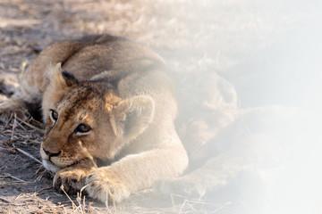 Serengeti © Luca
