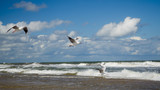 Seagulls flying on the sea coast.  Freedom concept.