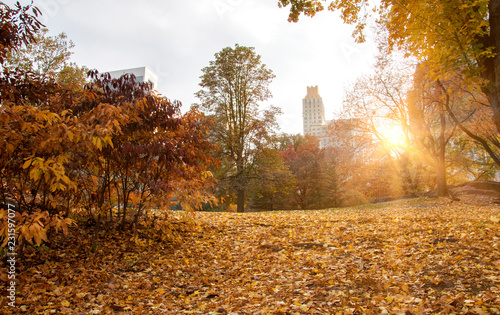 Foto Murales Central Park during fall season, New York
