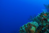 A tropical coral reef in the deep warm water of the Caribbean. This photo was taken by a scuba diver around Grand Cayman