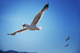 A seagull is flying in the sky. Birds in flight. Beautiful landscape with a flying seagull