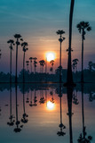 Sugar palm tree field with reflection in the water and sun so beautiful.