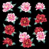 日本的な牡丹花, - 231625840