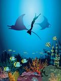 Underwater nature - sea, freediver, mantas, coral reef, fishes