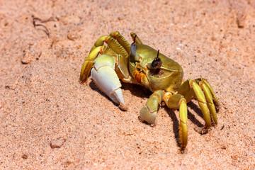 Close up image of yellow crab on sand © Yakov