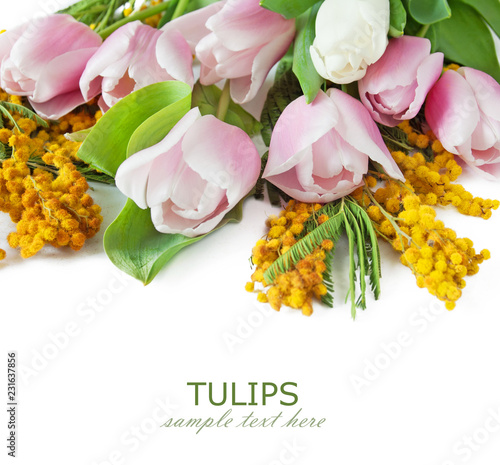 tulips and mimosa flowers bunch isolated on white background with sample text