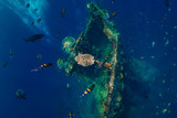 Beautiful underwater world with tropical fish and corals at USS Liberty Wreck, Bali - 231638837