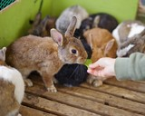 餌を食べるウサギ - 231645898