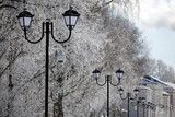 Snow trees and lantern, winter background. - 231652280