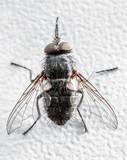 Fly close-up. - 231663046