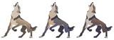 wolf howls, color vector illustration for your design.