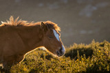 horse in the field - 231671830