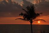 tropischer Sonnenuntergang am Straand mit Palme - 231672040