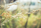 Grass on the field. Selective focus. Shallow depth of field. - 231680662