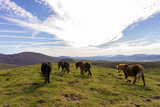 caballos salvajes en puerto de montaña. Belate - 231688098