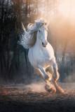 White stallion - 231703224