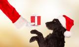 Black dog in santa cap - 231703836