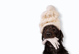 Black dog in winter outfit. - 231703855